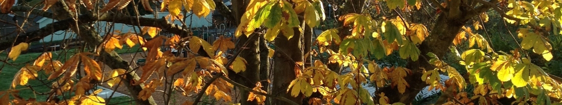 Horse chestnut leaves